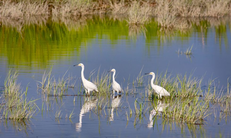 EPA Rule Would Close Loopholes in Clean Water Act, Restore Protections for Streams and Wetlands