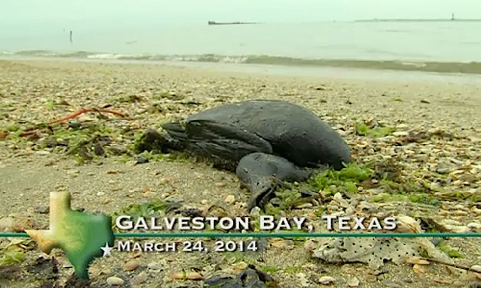 Texas Oil Spill Expected to 'Get Much Worse' for Wildlife