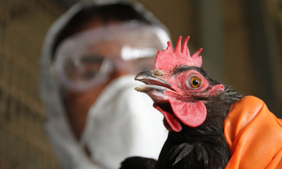 South Korean Poultry Approved for Sale in U.S. Despite Bird Flu Outbreak
