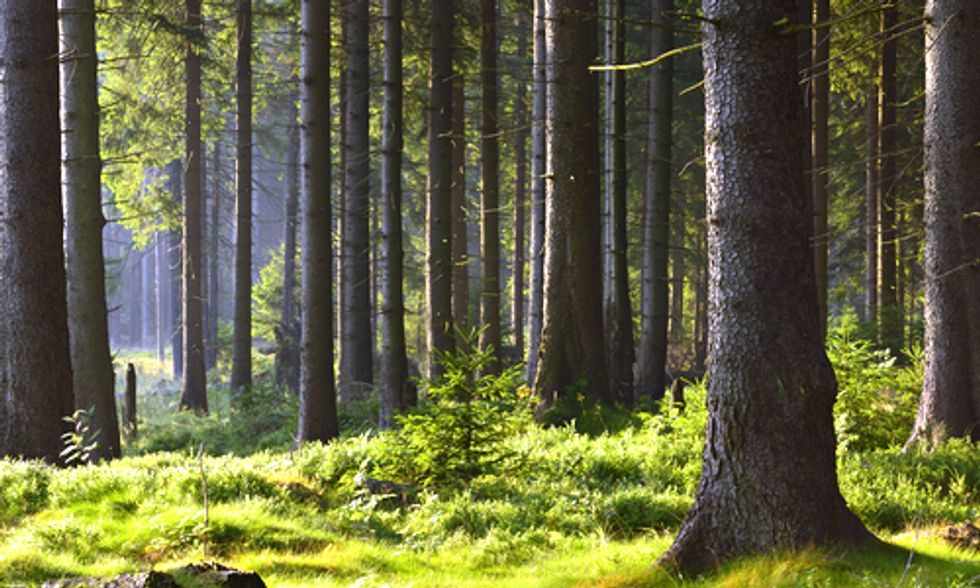 Burning Trees for Electricity Is Actually Dirtier Than Coal