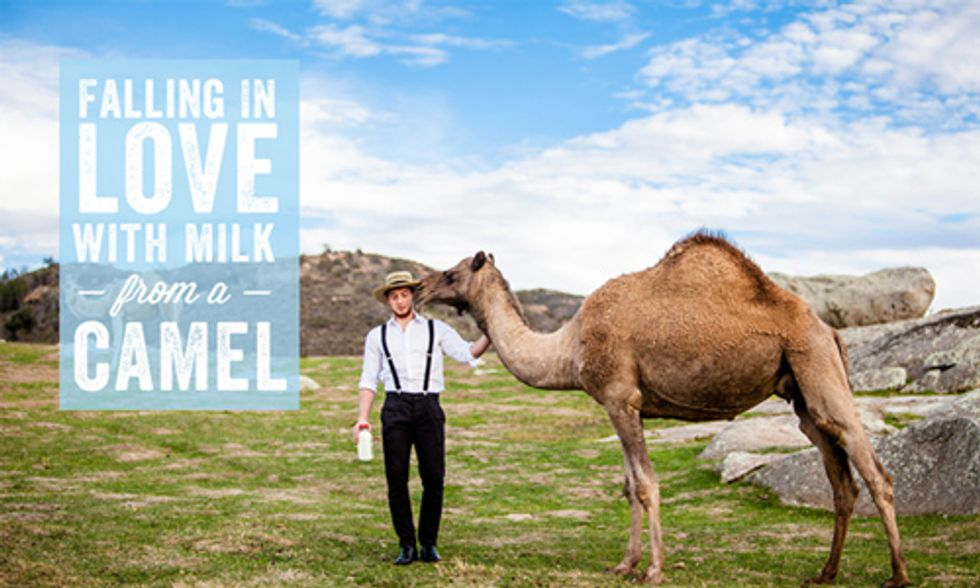 Will Camel's Milk Be the Next Big Craze?