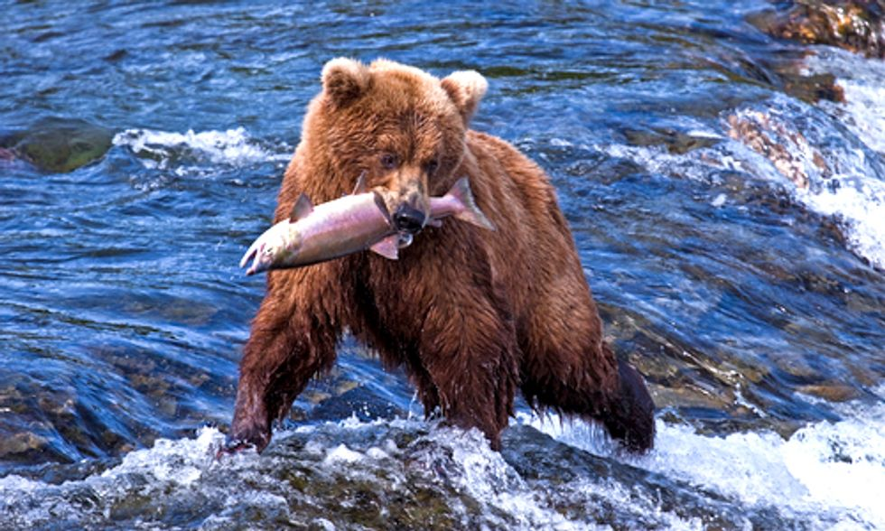 David Suzuki: Hundreds of Grizzly Bears Will Die in Barbaric Trophy Hunt