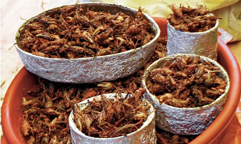 Are Insects the Next Climate-Friendly Superfood?