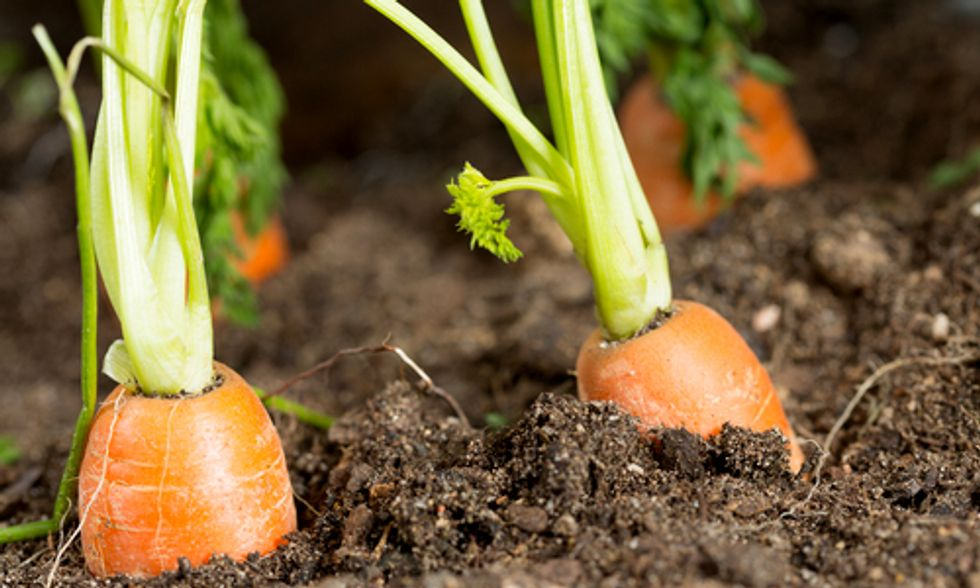 Certified Naturally Grown: A New Way to Identify Pesticide-Free, Non-GMO Food