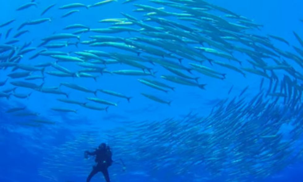 World's Largest Contiguous Marine Reserve Created to Stop Illegal Fishing