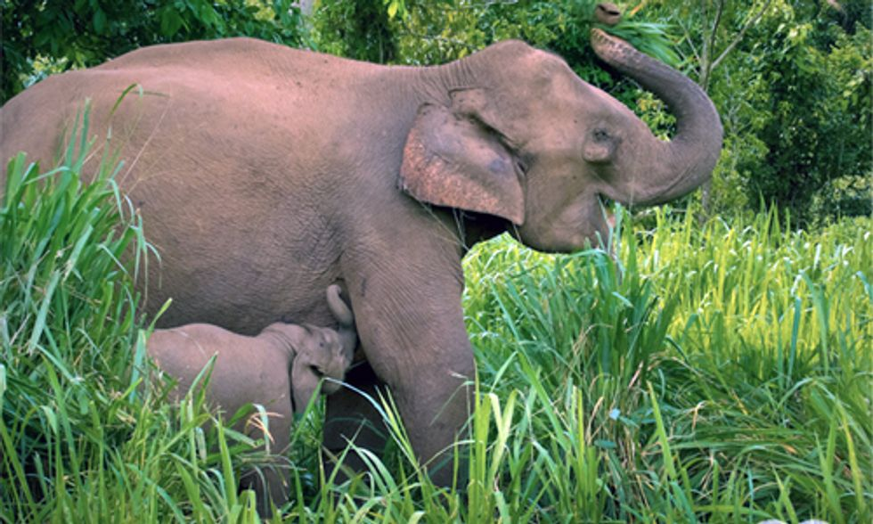 Global War Against Nature: 100 Elephants Killed Each Day in Illegal Ivory Trade