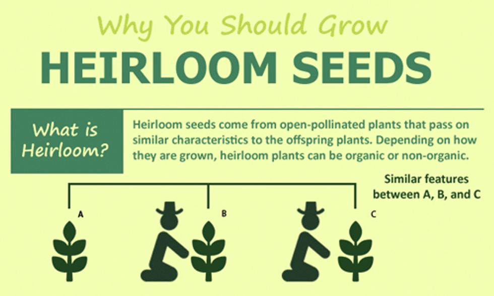 Why You Should Grow Heirloom Seeds
