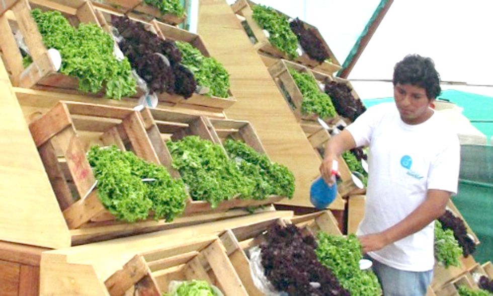 Check Out This Highway Billboard That Grows Organic Lettuce and Generates Drinking Water