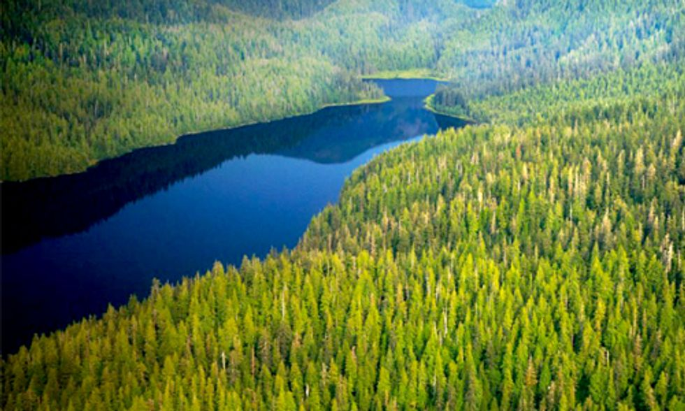6,000 Acres of Old Growth Forests Slated for Logging, the Largest Sale in Decades