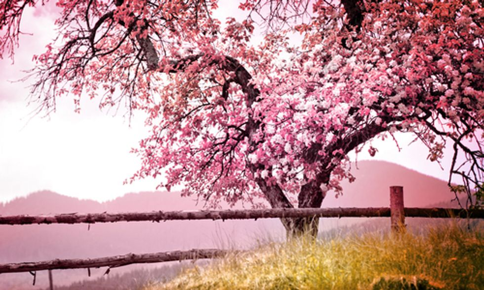 10 Reasons to Be Hopeful This Spring