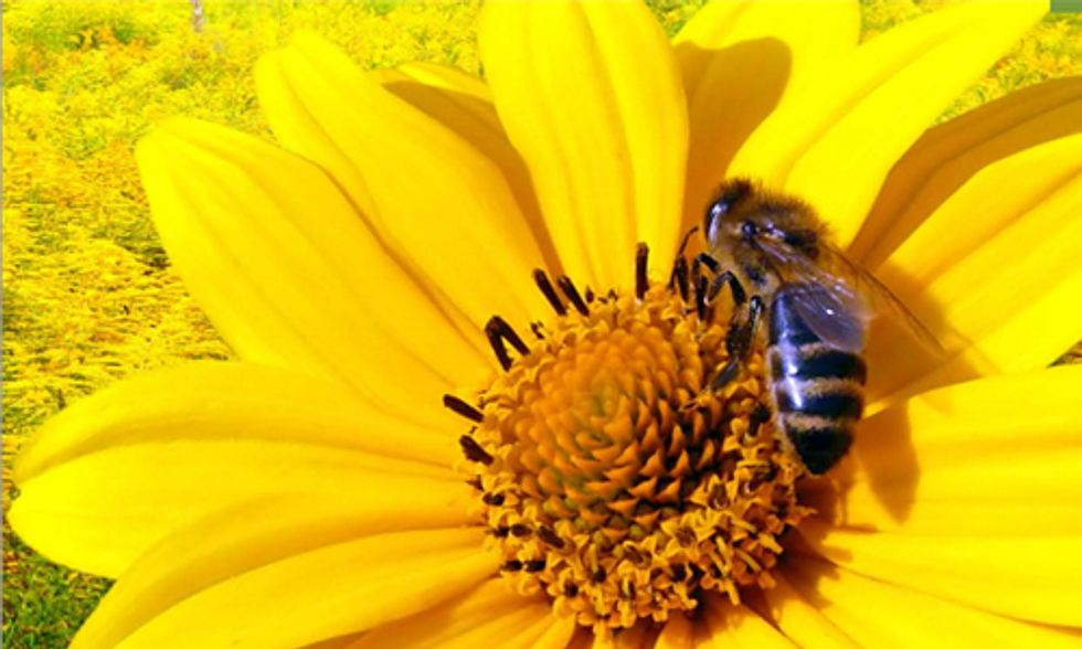 Lowe's to Stop Selling Bee-Killing Pesticides to Protect Pollinators