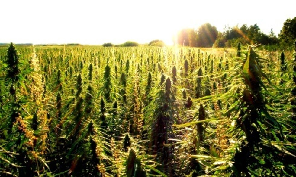 4 Best Reasons to Legalize Hemp