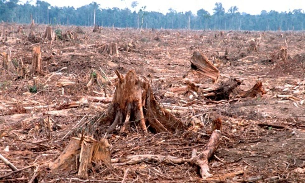 McDonald's Pledges to Eliminate Deforestation From Its Entire Supply Chain