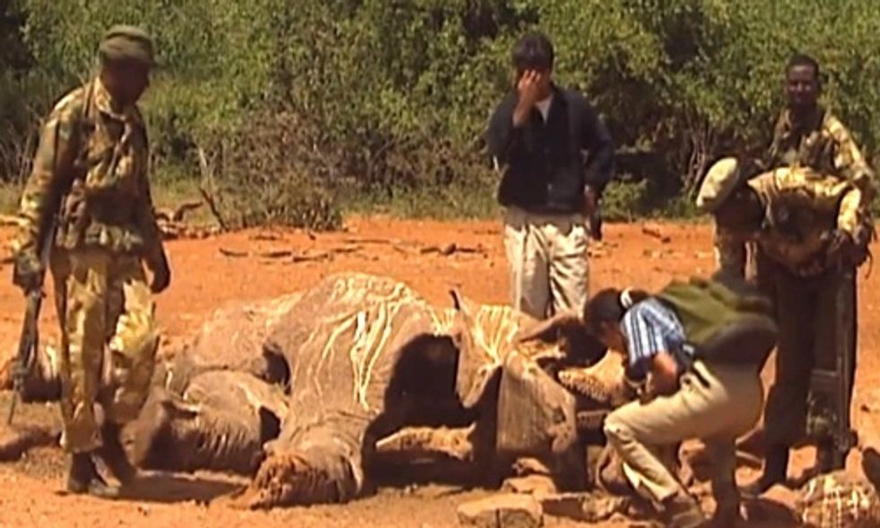 Every 20 Minutes an Elephant Is Killed for Its Tusks