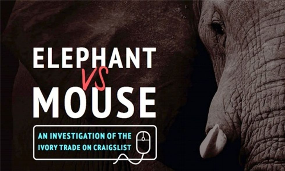 How Craigslist Contributes to the Killing of Elephants