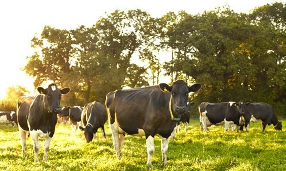 Organic Milk Under Attack by Scaremongers