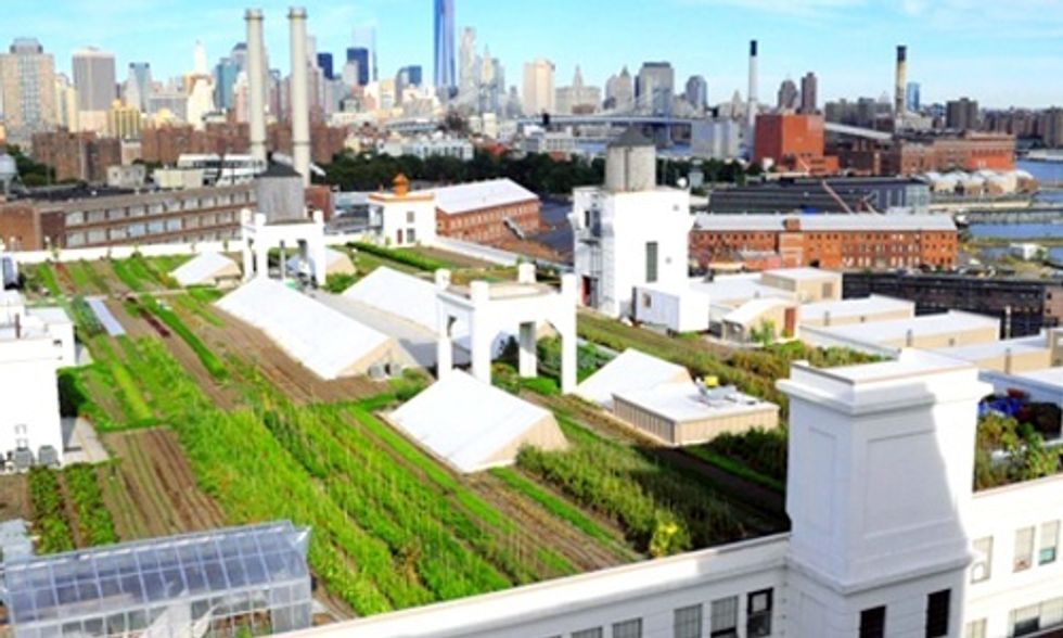 6 Urban Farms Revolutionizing Where Food Is Grown