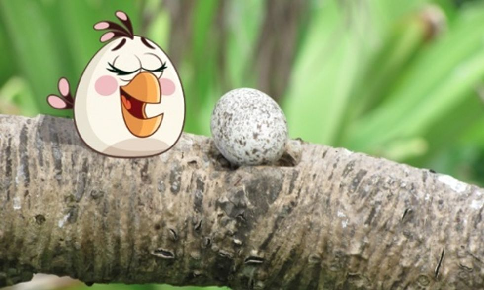 Angry Birds Mobilizes Millions to Save Endangered Species and #ActOnClimate