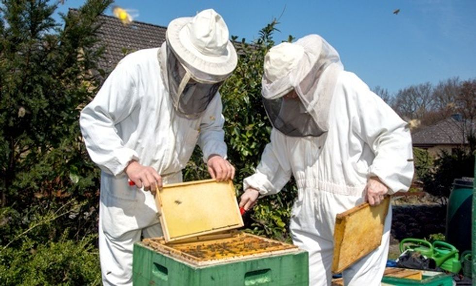 U.S. Honeybee Population Plummets by More Than 40%, USDA Finds