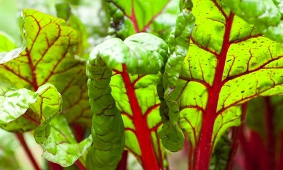 7 Reasons to Eat Swiss Chard (The Ultimate Superfood)