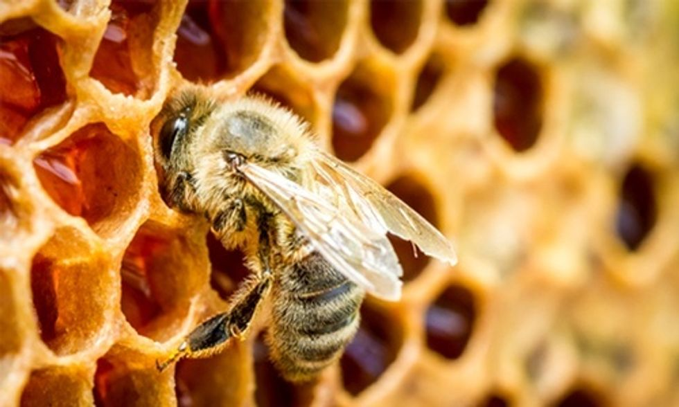 3 Problems With Obama's Plan to Save the Bees