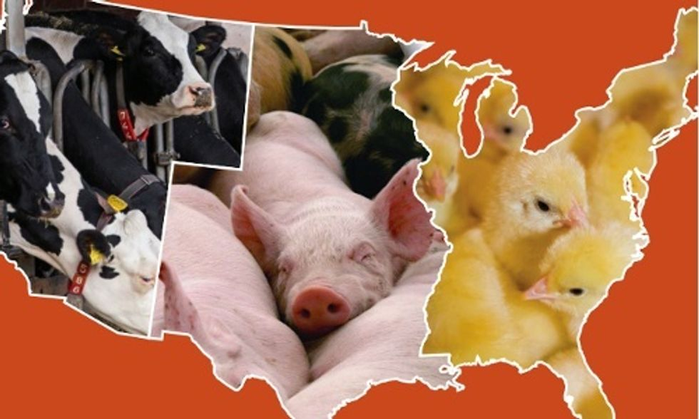 Factory Farms Are a #LoadOfCrap, Says New Report