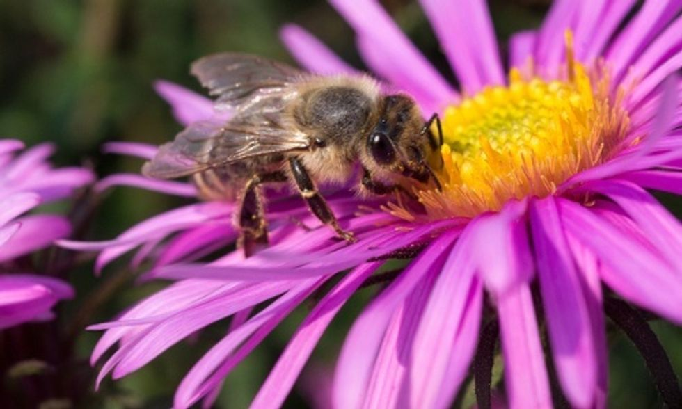 How Garden Centers Are Getting Toxic, Bee-Killing Pesticides Out of Their Plants and Off of Their Shelves