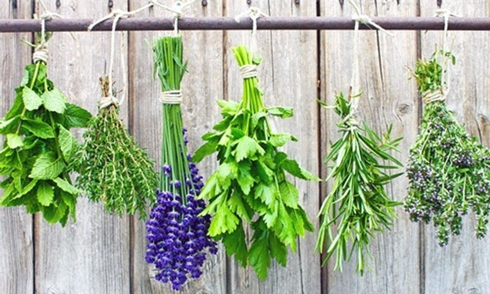 5 Medicinal Herbs You Can Grow In Your Backyard