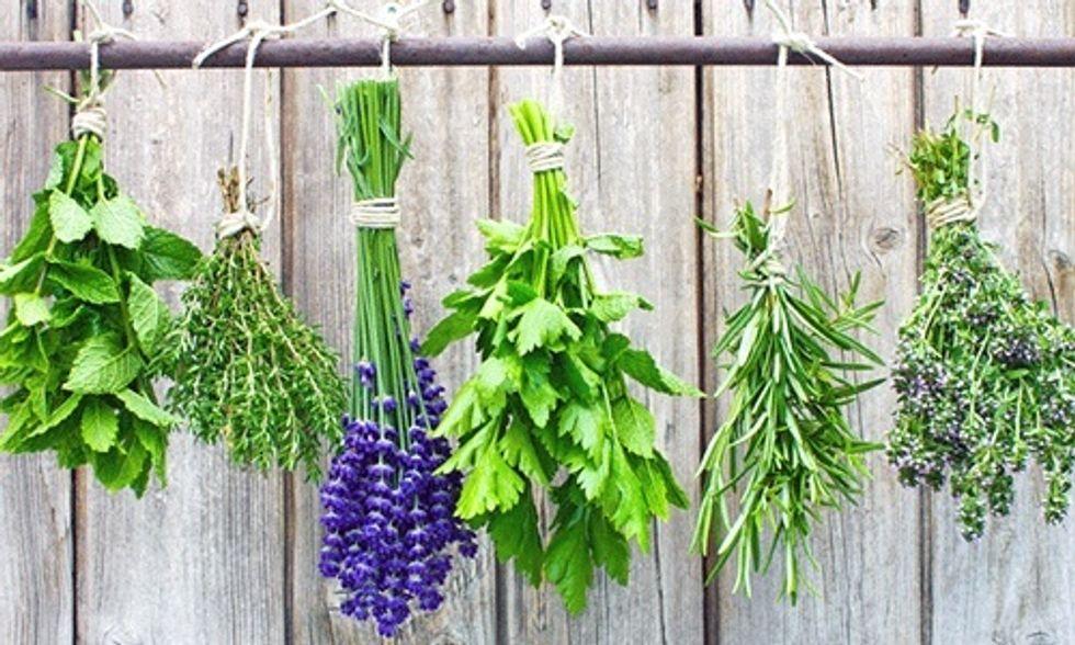 5 Medicinal Herbs You Can Grow In Your Backyard