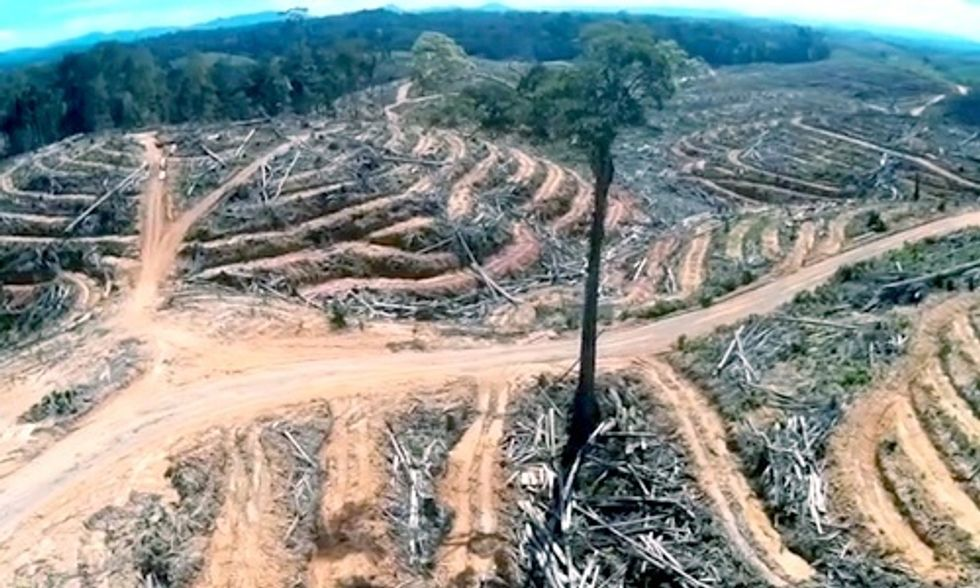 Drone Footage Captures the Shocking Reality of Rainforest Destruction