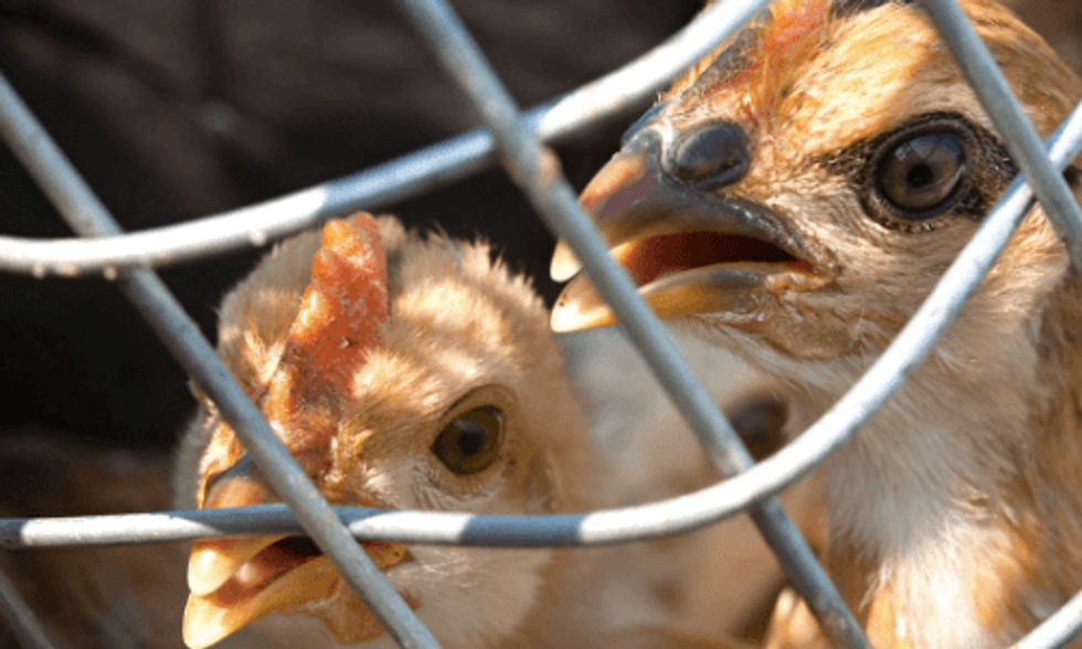 8 Things You Should Know About the Bird Flu Epidemic