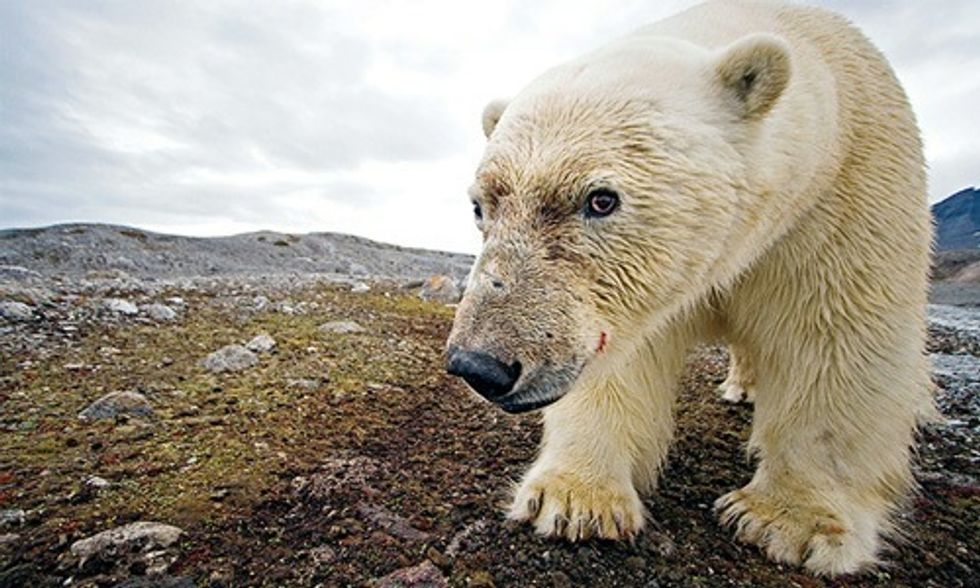 14 Reasons Why We Must Never Drill in the Arctic