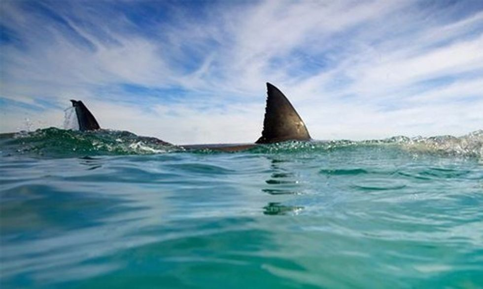 Is Climate Change to Blame for Increased Number of Shark Attacks?
