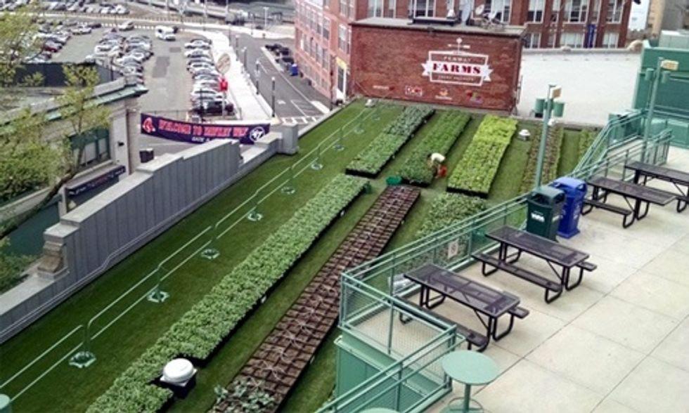Urban Farming Hits Major League Baseball Stadiums