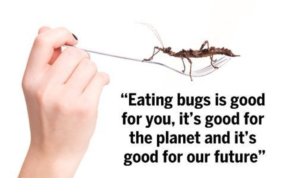 Why Eating Bugs Will Soon Become the New Normal