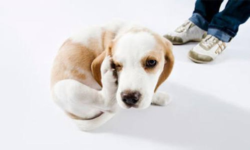 8 Ways to Keep Your Pet Flea Free