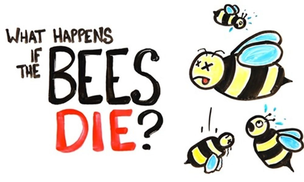If All the Bees in the World Die, What Would Happen to Humans?