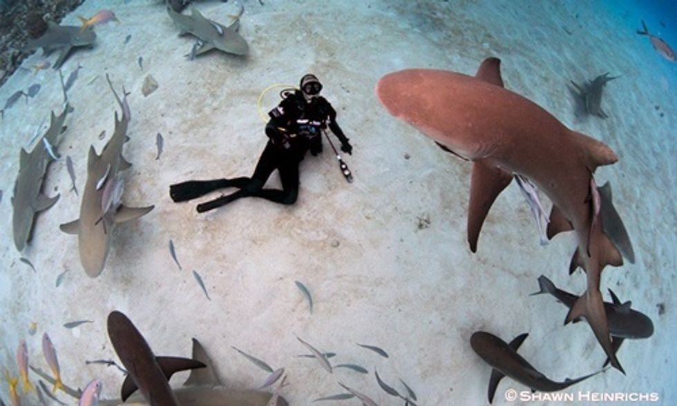 Richard Branson: Don't Turn Shark Encounter Into an Excuse to Kill More Sharks