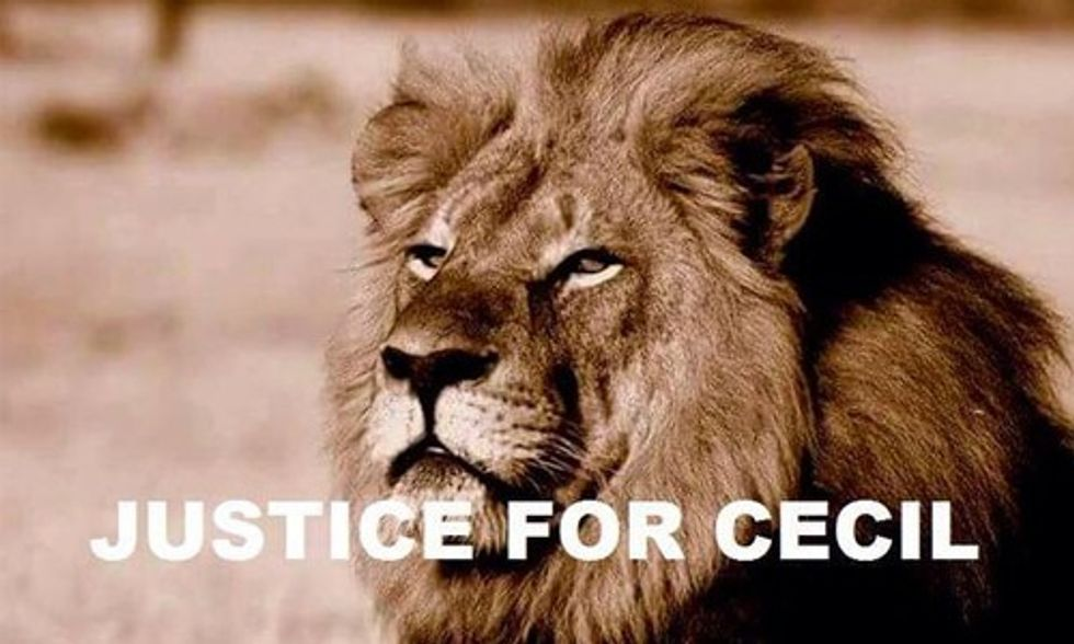5 New Developments in the Killing of Cecil the Lion