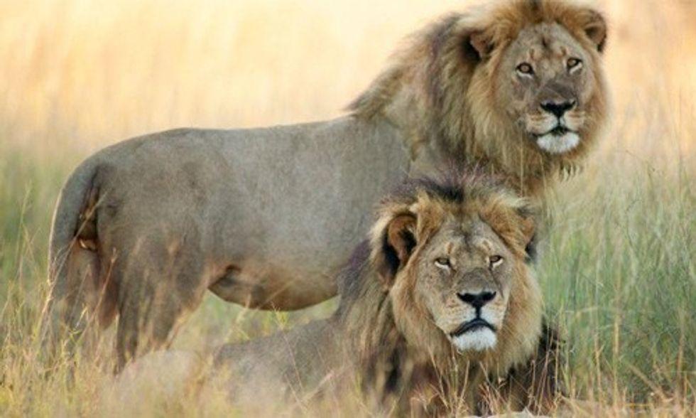 David Suzuki: Cecil the Lion's Killing Shines Spotlight on Barbaric Trophy Hunting