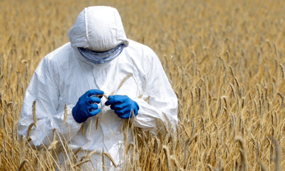 Scotland Bans the Growing of Genetically Modified Crops