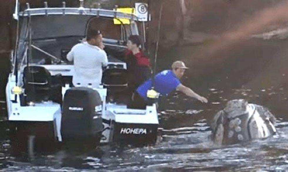 Whale Choking on Plastic Seeks Help From Fishermen