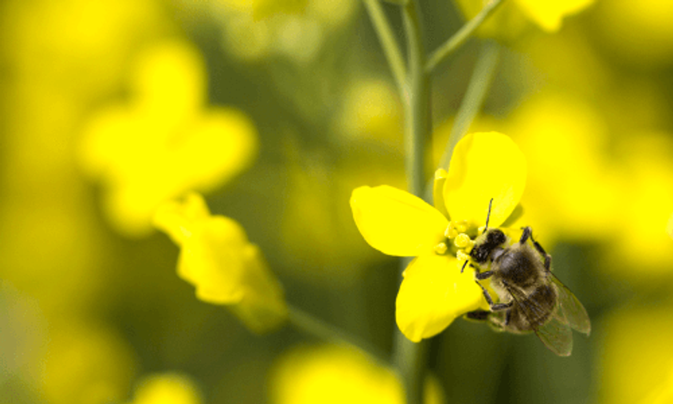 Two New Major Studies Link Pesticides to Decline of Honeybees