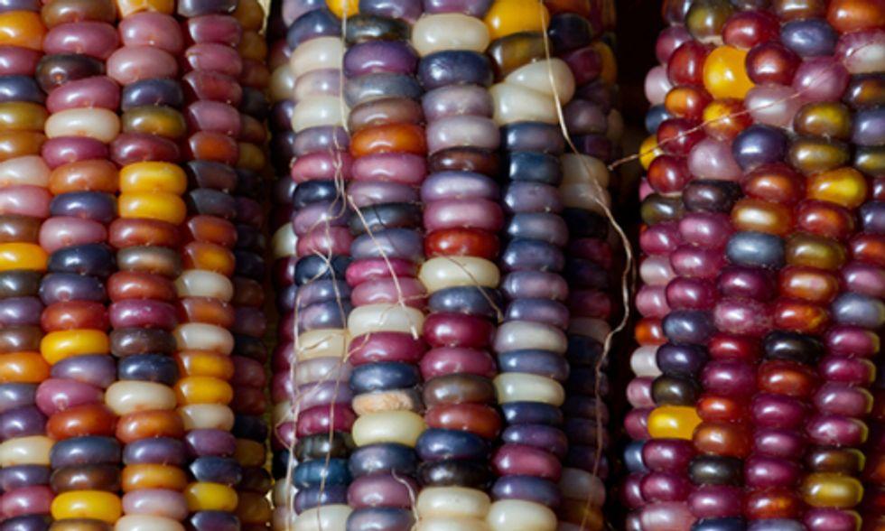 Monsanto Announces 'Global Center' for Developing GMO Corn