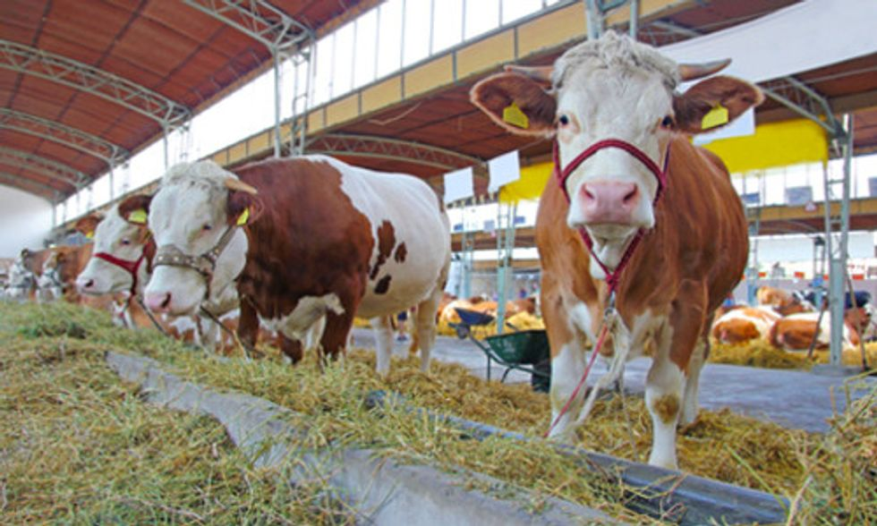 Reducing Meat and Dairy Consumption Important for Healthy People and Planet