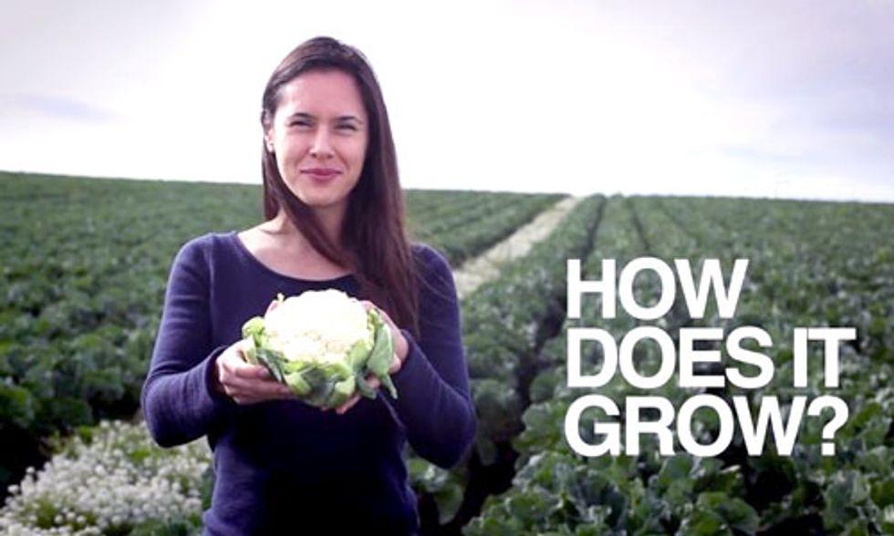Farmers Do What to Keep Cauliflower White?