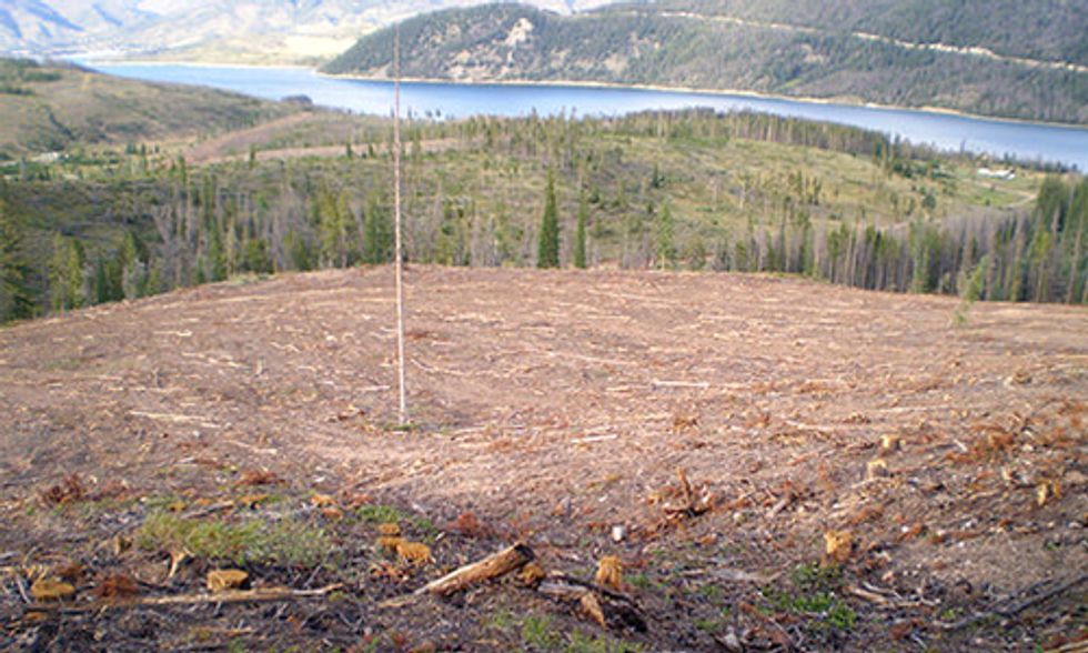 Public Forests Sacrificed to the Biomass Industry