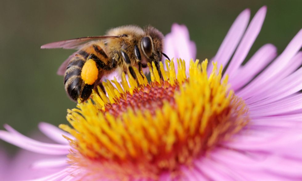 New 'F' Word Means More Bad News for Bees