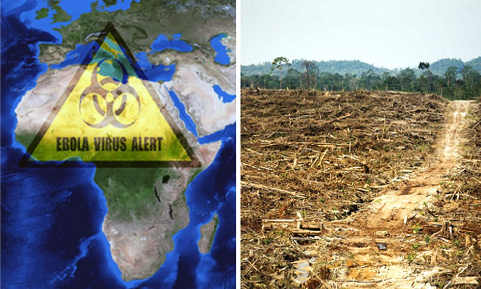 Is Palm Oil Explosion Driving Ebola Outbreak?