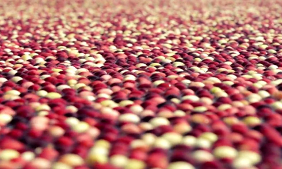 Cranberries: One of the World's Most Powerful Antioxidants